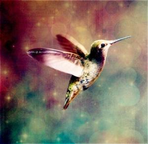 Hummingbird_Texture_by_tahbi
